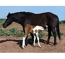 Paint Mare And Foal Photographic Print
