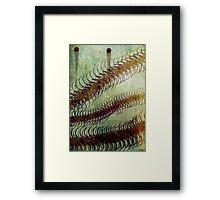 Millipedes Framed Print