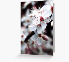 ....Blossoms in the Tree........ Greeting Card