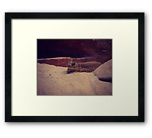 Reptile at Red Rock Canyon Framed Print