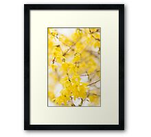 Fabulous Forsythia Framed Print