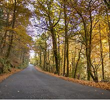 Autumn, Geres, Portugal by homydesign