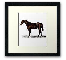 Vintage Thoroughbred Horse Framed Print