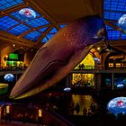 Something's up in the Milstein Family Hall of Ocean Life by Chris Lord