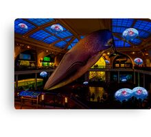Something's up in the Milstein Family Hall of Ocean Life Canvas Print