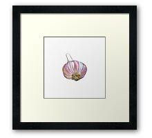 Red Garlic Framed Print