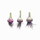 Three Garlic by Jennifer Gibson