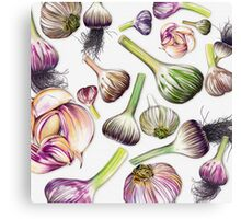 A Grouping of Garlic Canvas Print