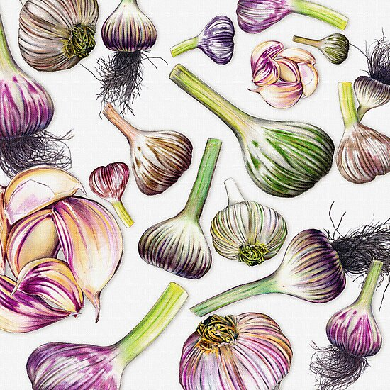 A Grouping of Garlic by Jennifer Gibson