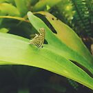 Cute Little Butterfly  by tropicalsamuelv