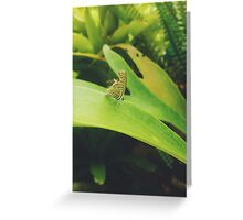Cute Little Butterfly  Greeting Card