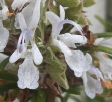 Rosemary Flowers Sticker