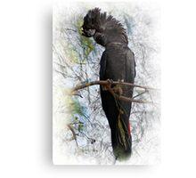 Red-tailed Black Cockatoo Metal Print
