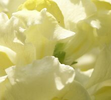 Blossom_1303 by POESIEDELAVIE