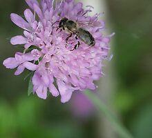 Blossom_1308 by POESIEDELAVIE