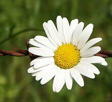 Blossom_1309 by POESIEDELAVIE
