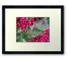 Blossom_1311 Framed Print