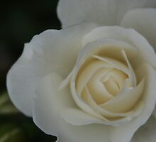 Blossom_1314 by POESIEDELAVIE