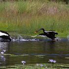 Get Off My Pond 2 by byronbackyard