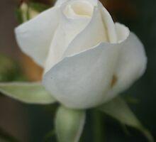 Blossom_1315 by POESIEDELAVIE