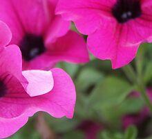 Blossom_1316 by POESIEDELAVIE