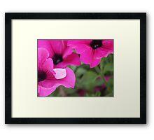Blossom_1316 Framed Print