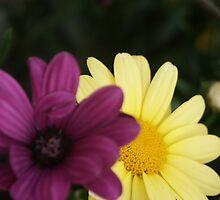 Blossom_1317 by POESIEDELAVIE
