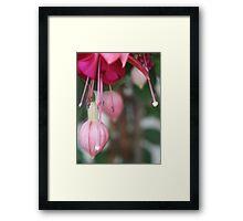 Blossom_1318 Framed Print