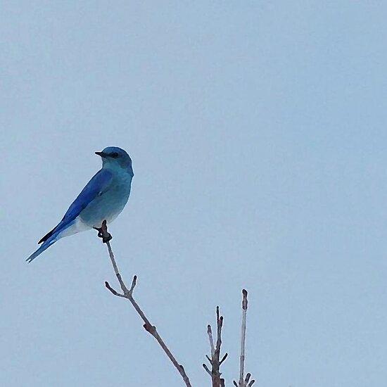 Spring Bluebird by Loree McComb