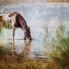 Wild Horse by Jacinthe Brault