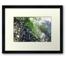 Forest_1305 Framed Print