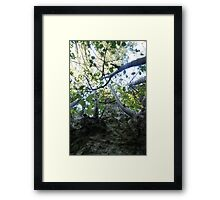 Forest_1310 Framed Print