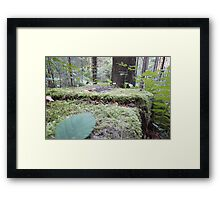 Forest_1317 Framed Print