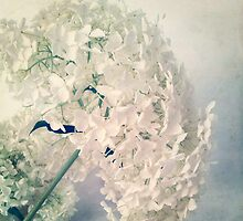 Romantic Hydrangea by Angela Bruno