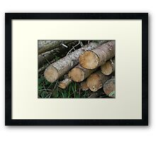 Forest_1321 Framed Print
