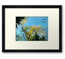 Forest_1325 Framed Print