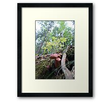 Forest_1316 Framed Print
