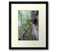 Forest_1312 Framed Print