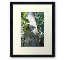 Forest_1307 Framed Print