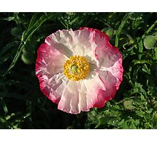 Poppy #6 Photographic Print