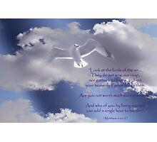 Not to Worry:  Matthew 6:26-27 Verse Photographic Print