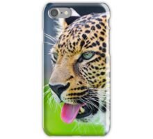 Leopard showing his tongue iPhone Case/Skin