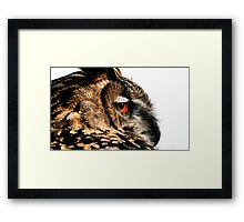 Eagle owl up close Framed Print
