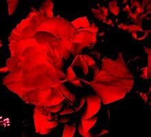 Dark Rose by POVPhotography