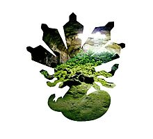 Zygarde used Camouflage Photographic Print