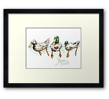 What fish? Framed Print