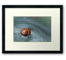 Snail in Stream Framed Print