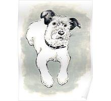Toni Terrier Poster
