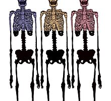 3 Multi Coloured Skeleton, Cool Hipster Original Two Tone by jonnyrowe