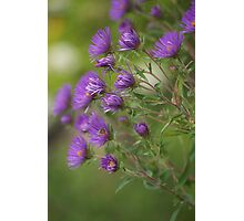 Flower - Color Photographic Print